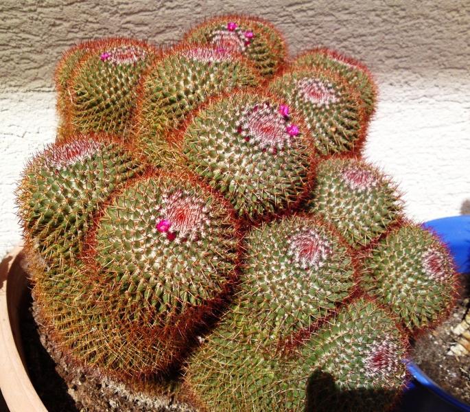 4_Kaktus5