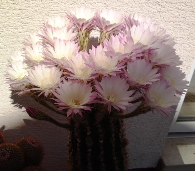 5_Kaktus1