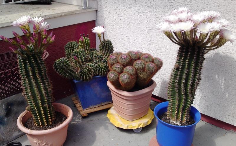 5_Kaktus10