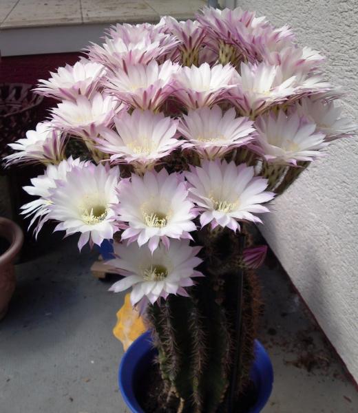5_Kaktus11