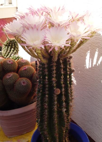 5_Kaktus2