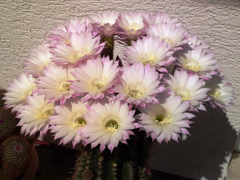 5_Kaktus6