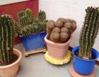 3_Kaktus3