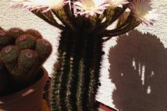 5_Kaktus8