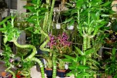 pflanzen_11