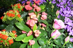 pflanzen_58