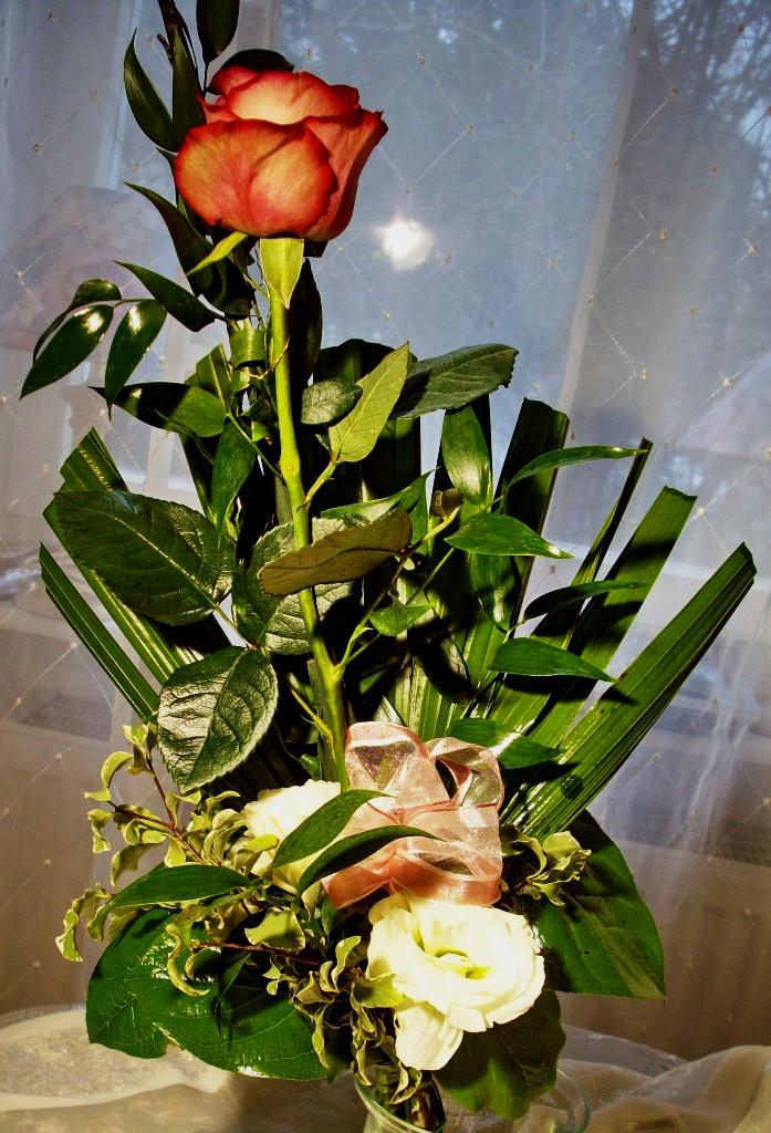 rose_hoch_3